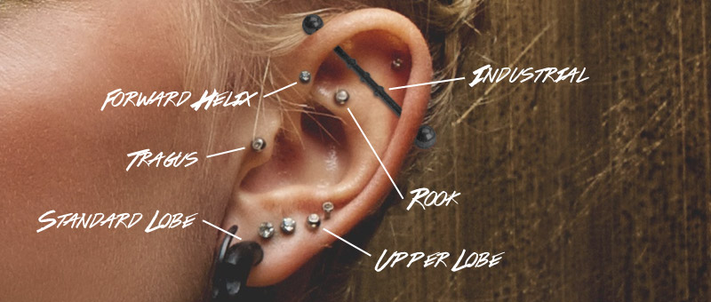 Ear Piercings by Hollywood Body Jewelry